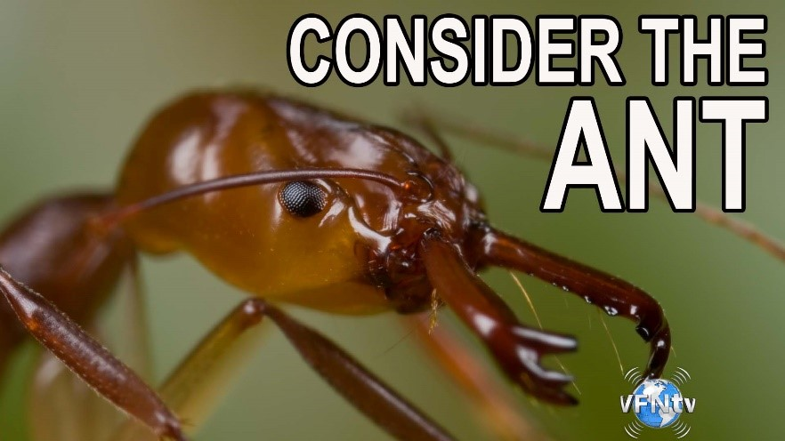 Conider the Ant